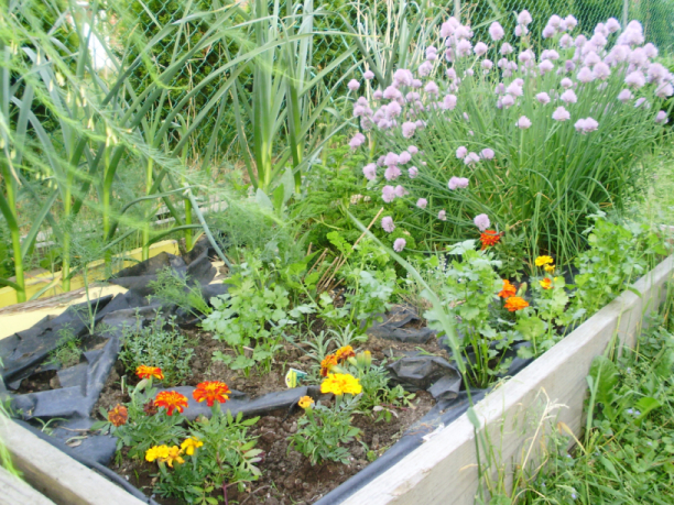 One of the raised beds.